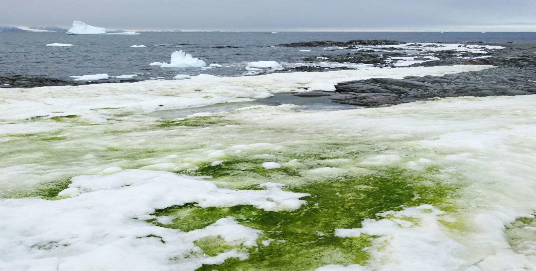 Green-snow